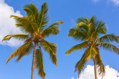 Palm trees and Sky. Two Palm trees and Sky with Clouds stock photography