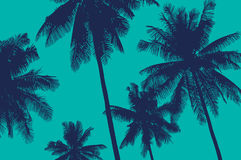 Palm trees in the sky. Vector illustration with tropical palm trees view stock illustration