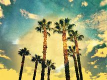 Palm Trees And Sky In Vintage Style Effect Stock Images