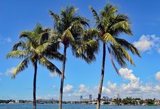 Palm Trees and Skylines Stock Photo