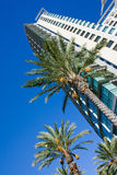 Palm trees and skyscraper Stock Image