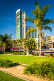 Palm trees and skyscraper in San Diego, California. Stock Images