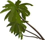 Palm Trees, Slanted, Tropical Stock Photos