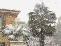 Palm Trees in Snow. Storm, Bologna, Italy Royalty Free Stock Image