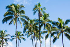Palm trees. Soaking up the midday sun Stock Images