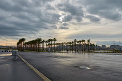 Palm trees in the Sochi Olympic Park. Russia Royalty Free Stock Photos