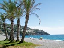 Palm trees on spanish beach. On a blue sky stock photo