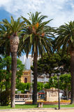 Palm trees in Spanish village Stock Image