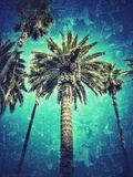 Disrupted palm trees. Palm trees with special effects royalty free stock photos
