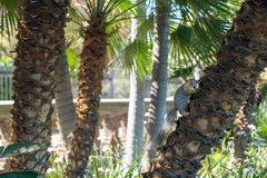 Palm trees and squirrel royalty free stock photo