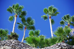 Palm trees with stones Royalty Free Stock Photos