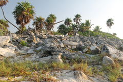 Palm trees and stones. Royalty Free Stock Photo