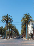 Palm trees on the street. Royalty Free Stock Photo