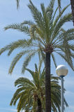 Palm trees and street light Royalty Free Stock Photo