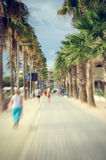 Palm trees on the street Stock Photography