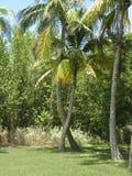 Palm trees, Stuart, Florida Stock Photography