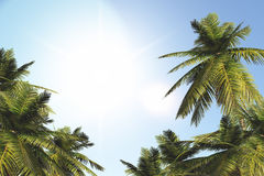 Palm Trees in Summer Stock Image