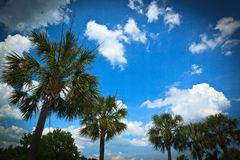 Palm trees and Summer Sky. Palm trees and partly cloudy summer sky Stock Photos