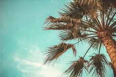 Palm Trees Summer Sky Toned Effect Bottom View Copy Space stock photography