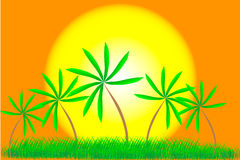 Palm trees and summer sunset. Illustration of a tropical sunset and palm trees Royalty Free Stock Images
