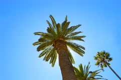 Palm trees during summertime. The Sun is shining behind the tree. Stock Photography