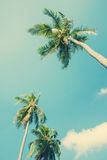 Palm trees in sun light on blue sky. For Holiday travel design. Vintage Royalty Free Stock Photography