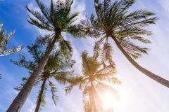 Palm Trees Sun Light Hot Equator Nature Landscape Tropical Background Holiday Travel Design Toned Shabby. Vintage Effect Royalty Free Stock Images