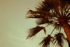 Palm Trees Sun Light Sunset Sunrise Bleached Toned Effect royalty free stock image