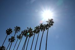 Palm trees in the sun royalty free stock photography