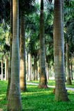 Palm trees in sun shine, vertically Royalty Free Stock Image