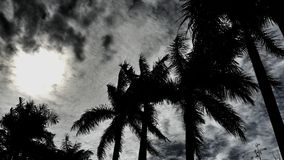 Palm trees and sun shines. Palm trees on daylight Royalty Free Stock Photography