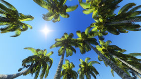 Palm trees and sun Stock Image