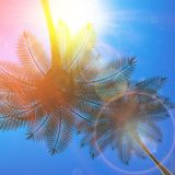 Palm trees and sun in sky. Royalty Free Stock Photo