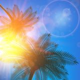 Palm trees and sun in sky. Royalty Free Stock Photos