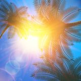 Palm trees and sun in sky. Stock Photo