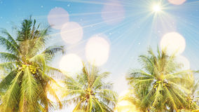 Palm trees and sunlight Royalty Free Stock Image