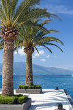 Palm trees on a sunny day in the marina Porto Royalty Free Stock Photos