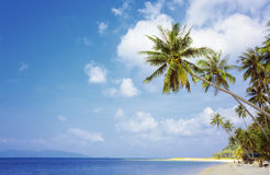 Palm trees with sunny day. Thailand. Koh Samui island. Stock Photography