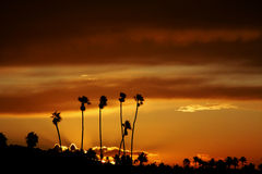Palm Trees at Sunrise. Sunrise behind a group of palm trees in Oceanside California Royalty Free Stock Photos