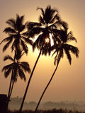Palm Trees at sunrise Royalty Free Stock Image