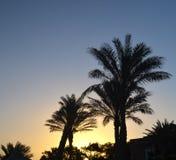 Palm trees at sunrise Stock Photos