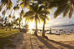 Palm trees at sunrise, Fiji Royalty Free Stock Image