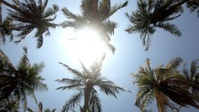 Palm trees sunrise lens flare through palm leaves on a beautiful blue sky background.  stock video footage