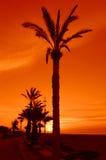 Palm trees sunrise Royalty Free Stock Images
