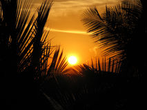 Palm trees in sunset Stock Photos