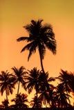 Palm trees at sunset Stock Photos