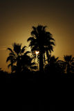 Palm Trees with sunset stock photography