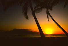 Palm Trees in Sunset. Palm trees  silhouetted in a colorful tropical sunset Royalty Free Stock Photos