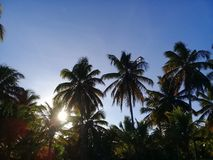 Palm trees on sunset with blue sky royalty free stock image