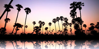 Palm trees on sunset. The silhouette of palm trees on sunset Stock Image
